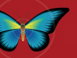 Nazdar Butterflies